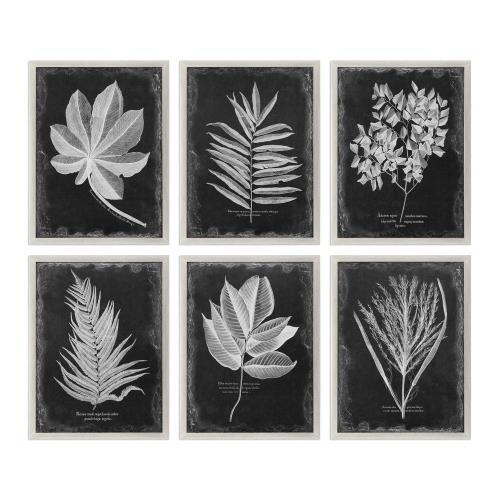Uttermost 33671 Foliage - 33.75 inch Framed Print (Set of 6)