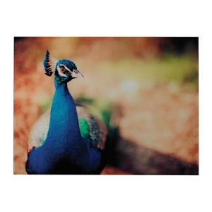 Photography - 32 Inch Min 2-Peacock Photograph Wall Art