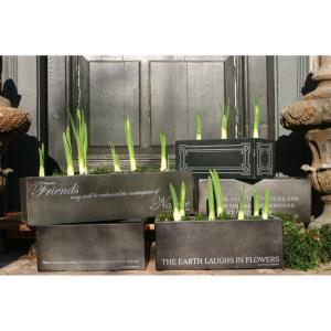 Earth Laughs - 5 Inch Bulb Forcer