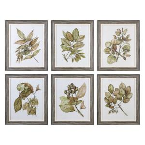 Seedlings - 24.13 inch Framed Print (Set of 6) - 20.13 inches wide by 1.25 inches deep