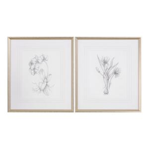 Botanical Sketches - 32 inch Framed Print (Set of 2) - 28 inches wide by 1.5 inches deep