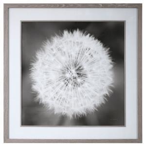 "Dandelion Seedhead - 53.75"" Framed Print"