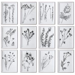 Contemporary Botanicals - 22.13 inch Framed Print (Set of 12)