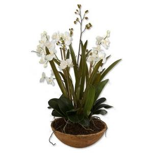 "Moth Orchid - 33.5"" Floral Planter"