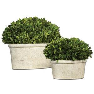 Preserved Boxwood - 14 inch Oval Dome Topiary (Set of 2)