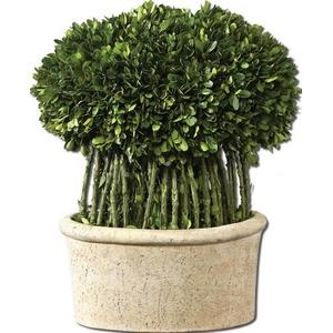 Preserved Boxwood - 17 inch Willow Topiary