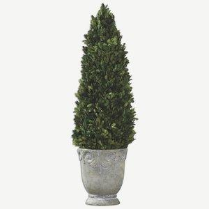 "Boxwood - 29"" Cone Topiary"