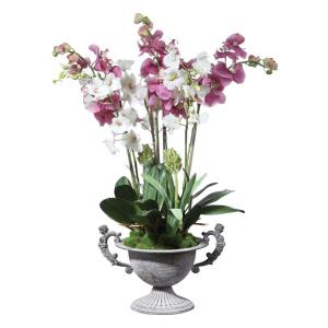 Nydia - 28 inch Potted Orchid