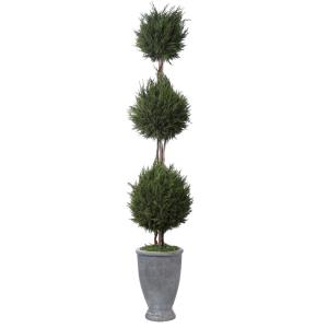 Cypress Triple - 43 inch Topiary