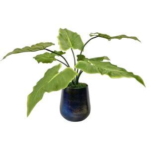 Mari Calla - 24 inch Accent Plant